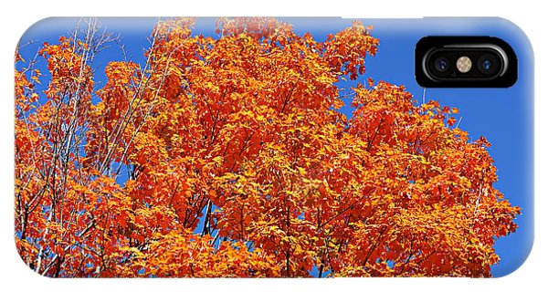 Fall Foliage Colors 19 IPhone Case