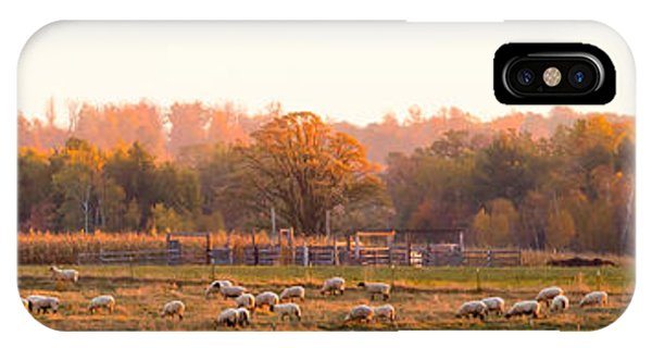 Fall Graze IPhone Case