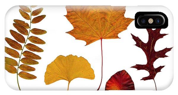 iPhone Case - Fall Leaves by Tony Cordoza