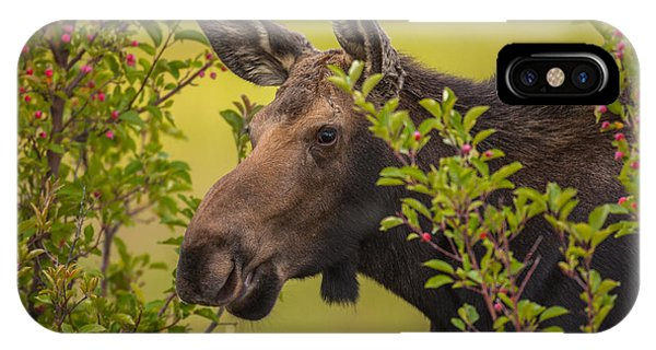Fall Moose IPhone Case