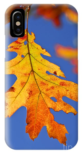 Leaf iPhone Case - Fall Oak Leaf by Elena Elisseeva