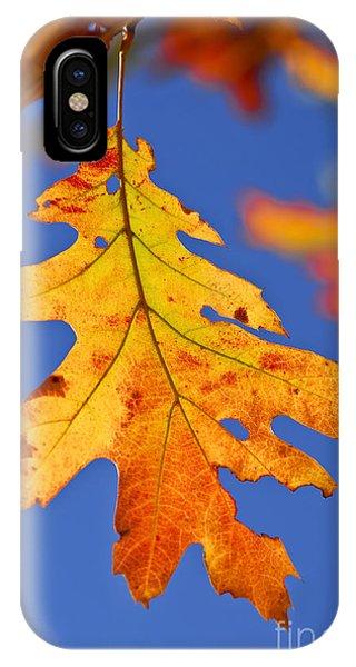 Forest iPhone Case - Fall Oak Leaf by Elena Elisseeva