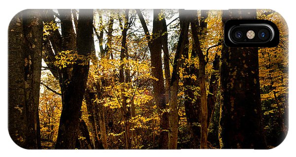 Fall Scene In Bidwell Park IPhone Case