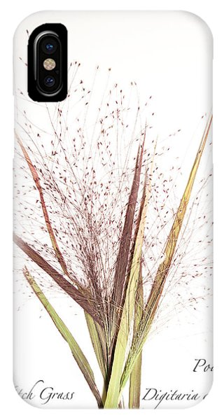 Fall Witch Grass IPhone Case