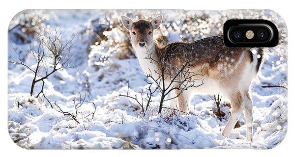 Fallow Deer In Winter Wonderland IPhone Case