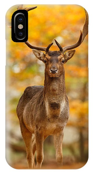 Proud iPhone Case - Fallow Deer In Autumn Forest by Roeselien Raimond