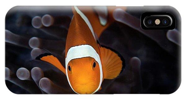 False Clownfish IPhone Case