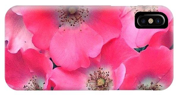 Petals iPhone Case - Trellis Pinks by Anna Porter