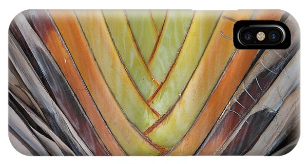 Fan Palm Trunk IPhone Case