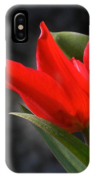 Fancy Tulip IPhone Case