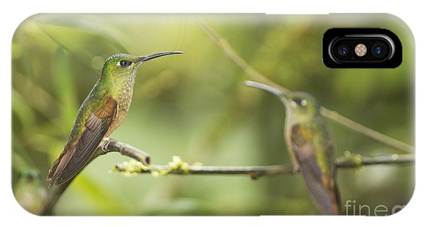 Fawn-breasted Brilliant Hummingbirds IPhone Case