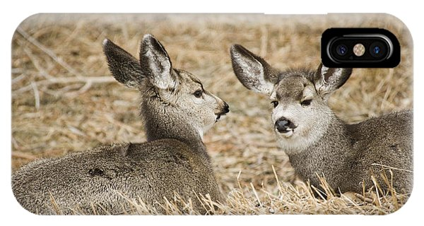 Fawns At Rest Phone Case by Bob Dowling