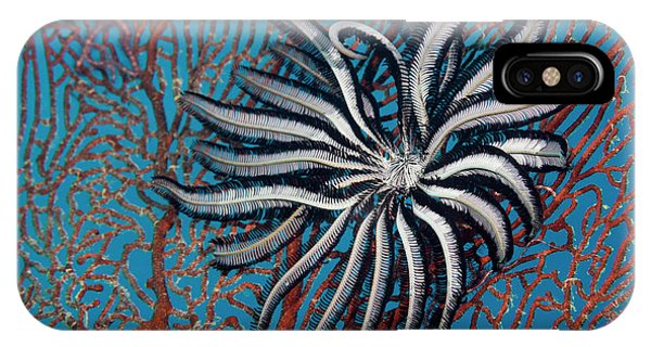 Barrier Reef iPhone Case - Feather Star by Michael Szoenyi/science Photo Library