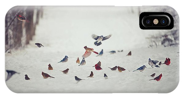 Winter iPhone Case - Feathered Friends by Carrie Ann Grippo-Pike