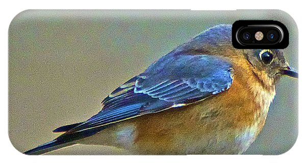 Febuary Bluebird  Phone Case by Constantine Gregory