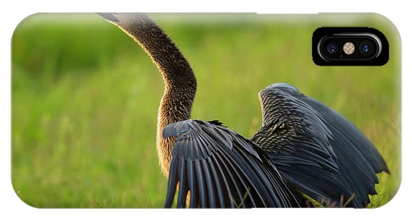 Anhinga iPhone Case - Female Anhinga Drying Out Wings by Maresa Pryor