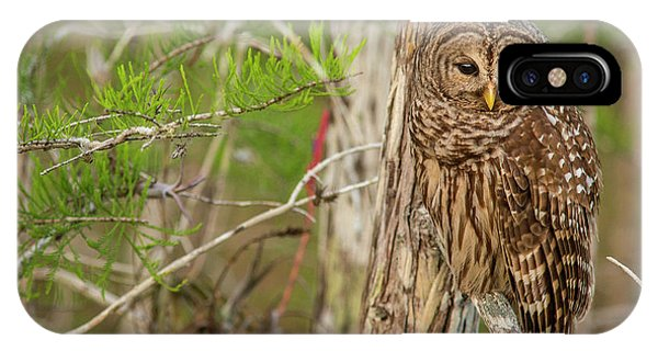 Bald Cypress iPhone Case - Female Barred Owl (strix Varia by Chuck Haney