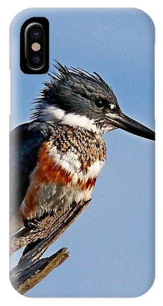Female Belted Kingfisher IPhone Case