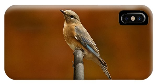Female Bluebird IPhone Case