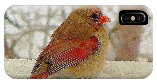 Female Cardinal Caught In Snowstorm IPhone Case
