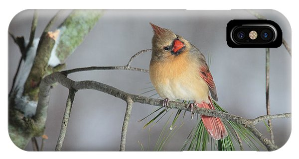 Fowl iPhone Case - Female Cardinal by Everet Regal