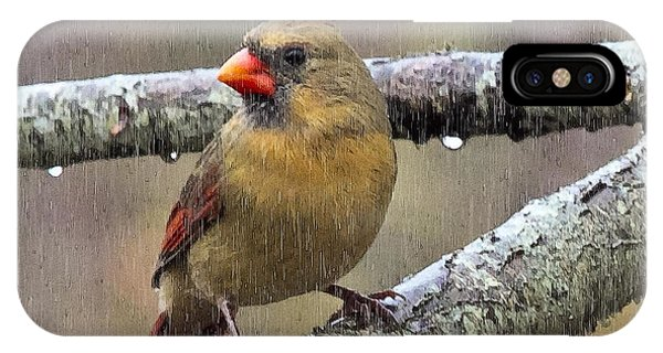 Female Cardinal Reigns In The Rain  Phone Case by Constantine Gregory