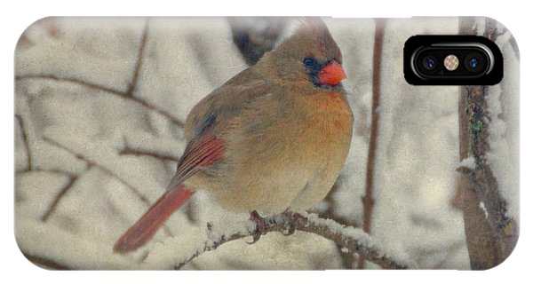 Female Cardinal In The Snow II IPhone Case