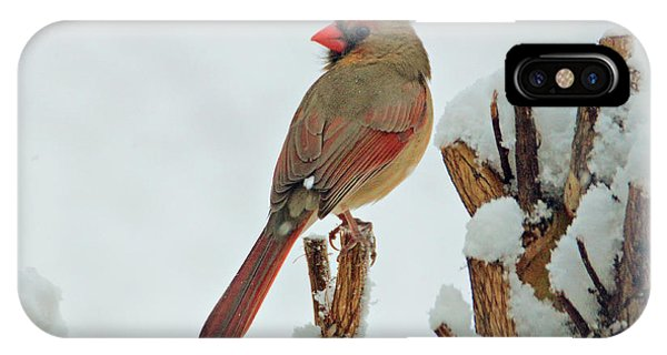 Female Cardinal In The Snow IPhone Case