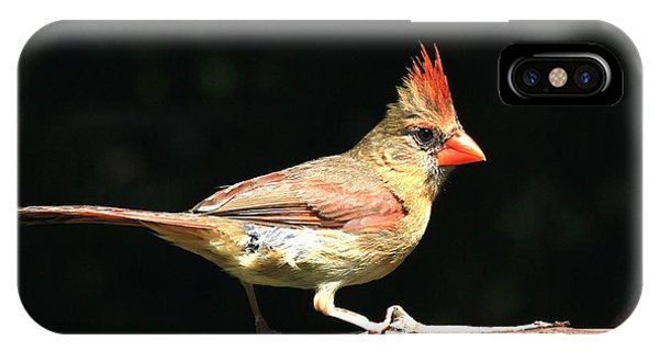 Female Cardinal On Black IPhone Case
