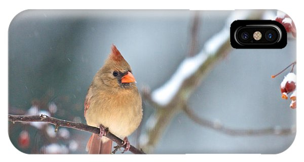 Female Cardinal On Cherry Tree In Snow IPhone Case