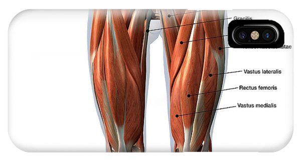 Rectus Abdominis Muscle Iphone Cases Page 2 Of 6 Fine Art America