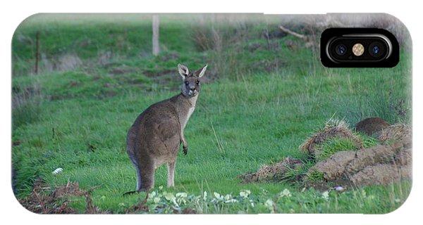 Female Kangaroo In Yarra Glen 08-07-2014 Phone Case by Bert Ernie