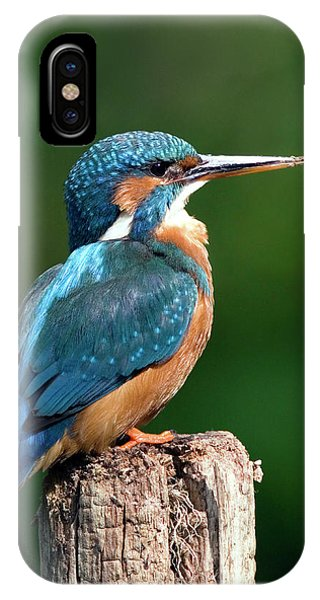 Female Kingfisher Phone Case by John Devries/science Photo Library