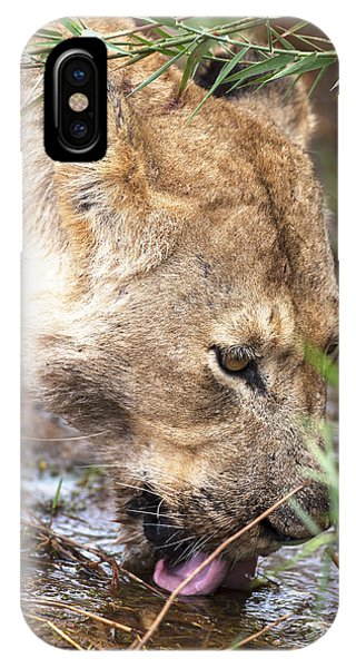 Female Lion Drinking Phone Case by Sean McSweeney