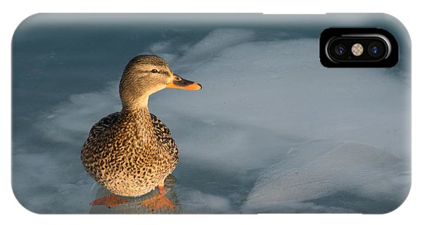 Female Mallard In Icy Water IPhone Case