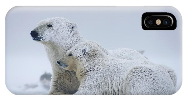 Winter iPhone Case - Female Polar Bear Resting With Her Two by Steven Kazlowski