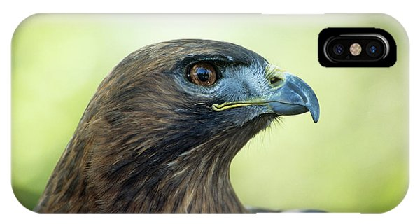 Red Tail Hawk iPhone Case - Female Red-tailed Hawk by Anthony Cooper/science Photo Library