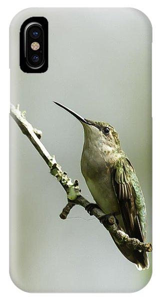Female Ruby-throated Hummingbird 1 IPhone Case