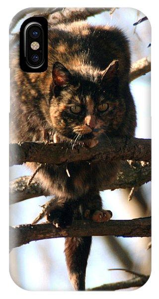 Feral Cat In Pine Tree IPhone Case