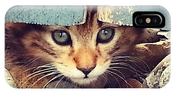 Animal iPhone Case - Peek A Boo Kitten by Mark Kiver