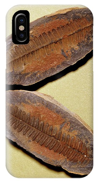 Fern Fossil (pecopteris Sp.) Phone Case by M P Land/science Photo Library