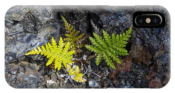 Ferns In Volcanic Rock IPhone Case