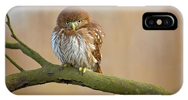 Cute iPhone Case - Ferruginous Pygmy Owl by Milan Zygmunt