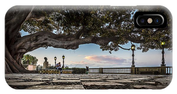 Ficus Magnonioide In The Alameda De Apodaca Cadiz Spain IPhone Case