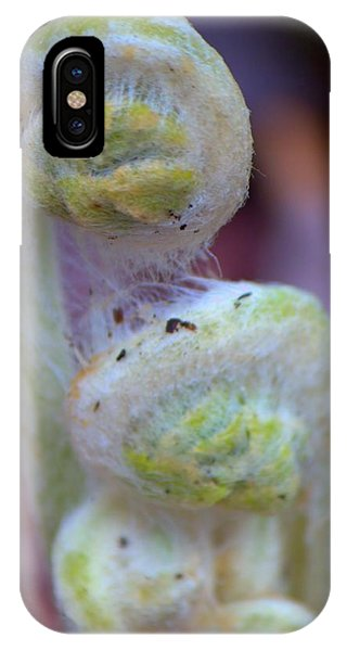 Fiddlehead Fern IPhone Case