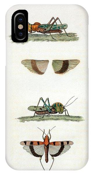 Field Crickets IPhone Case