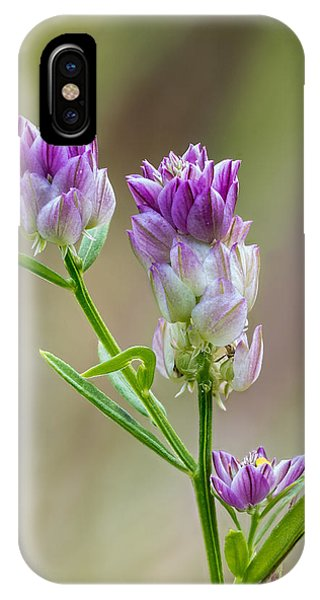 Field Milkwort IPhone Case
