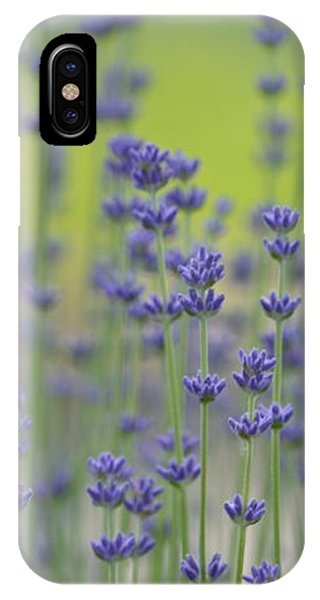 Field Of Lavender Flowers IPhone Case