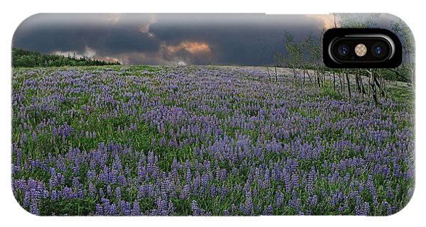 Field Of Lupine IPhone Case