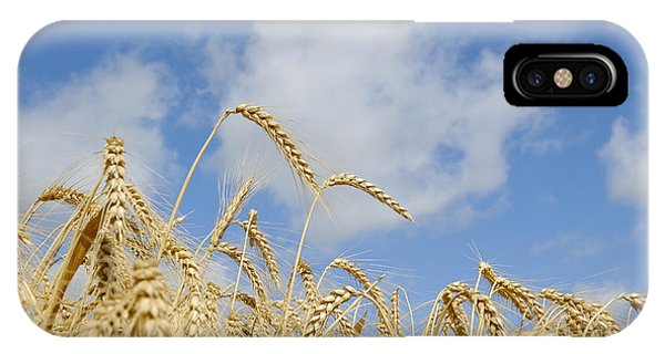 Field Of Wheat IPhone Case